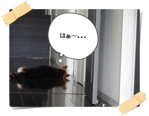 komaro20140714_2.jpg