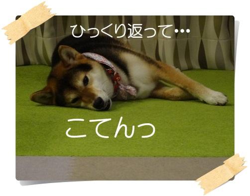 komaro20140829_2.jpg