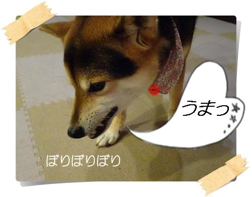 komaro20140904_2.jpg