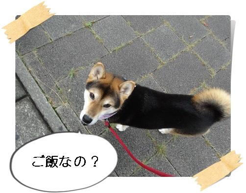 komaro20140907_7.jpg