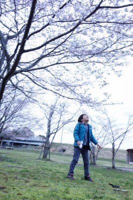 2014年4月1日 草川原公園の桜_2