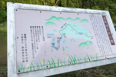 清和県民の森_4