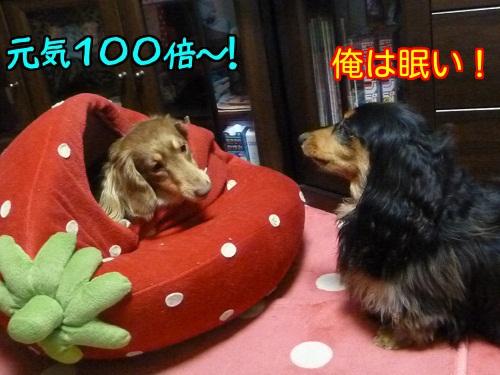 201403281246497bf.jpg