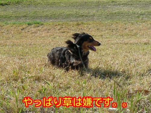 20140426175210061.jpg