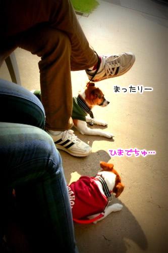 CIMG4611.jpg
