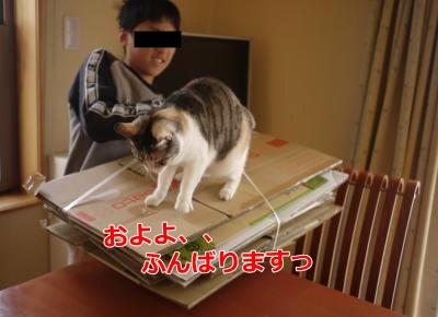 040_convert_20140618210349.jpg
