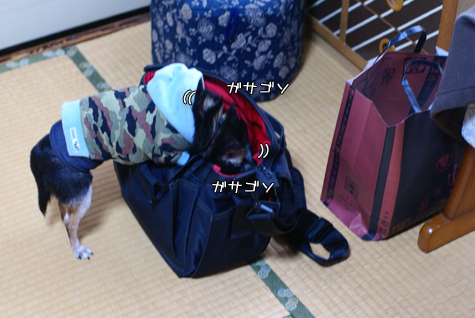 DSC064980304.jpg