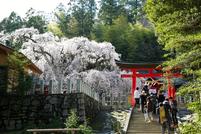 小川諏訪神社02