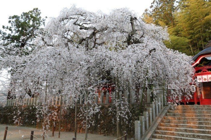 小川、諏訪神社01