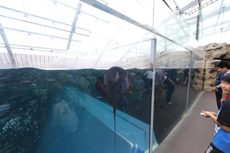 水族館02