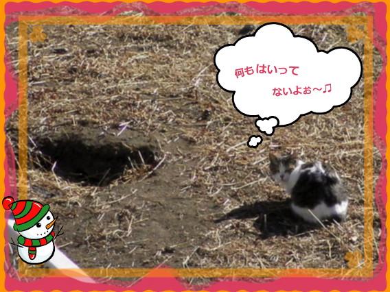 花ブ20140222-4