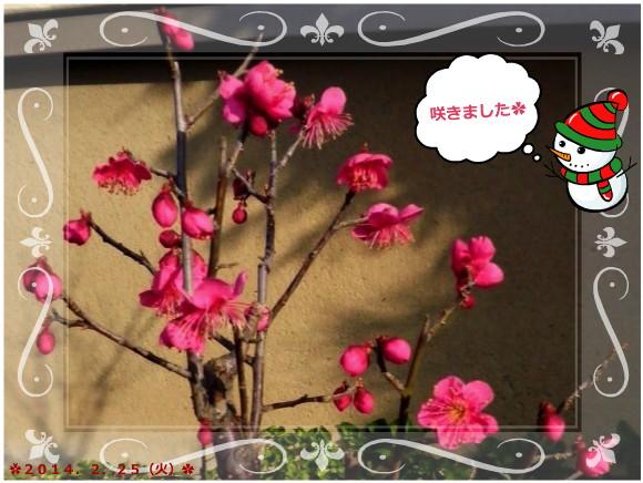 花ブ20140226-2