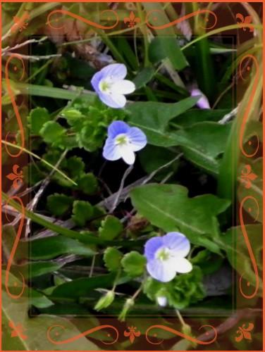 花ブ20140405-2
