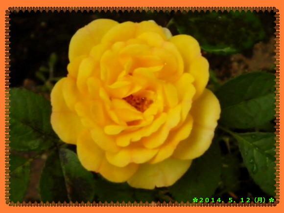花ブ20140513-2