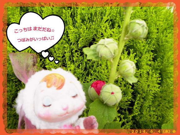 花ブ20140605-3