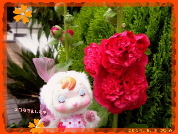 花ブ20140606-2