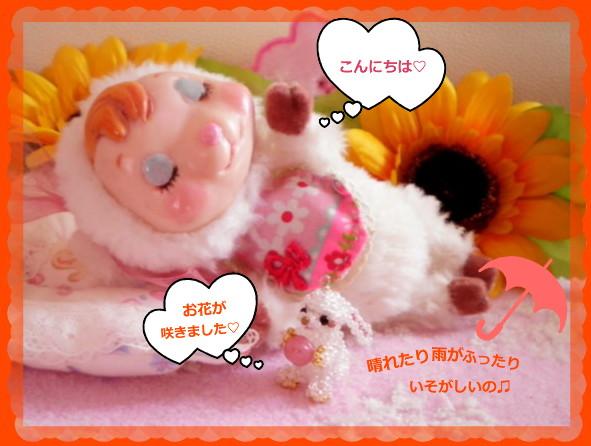 花ブ20140609-1
