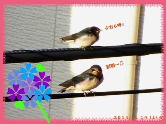 花ブ20140615-3