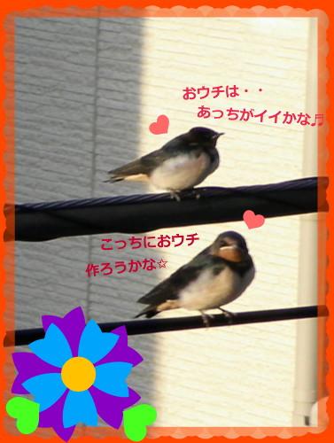 花ブ20140618-2