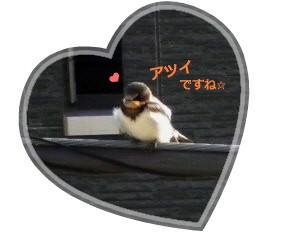 花ブ20140621-2