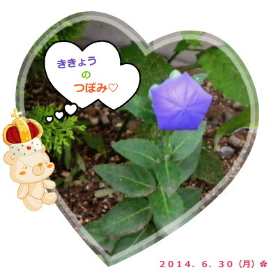 花ブ20140701-3