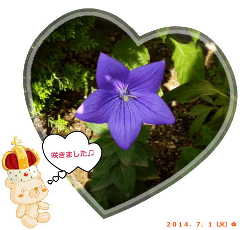 花ブ20140702-3
