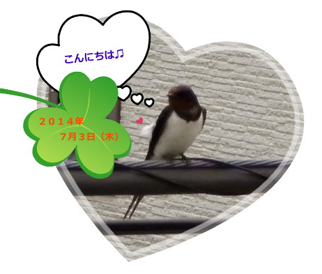 花ブ20140704-2