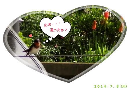 花ブ20140708-5