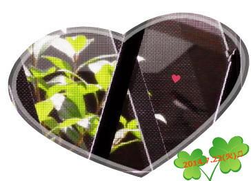 花ブ20140722-4