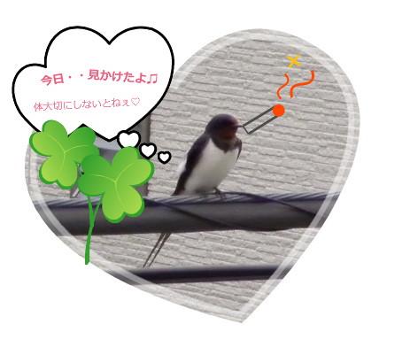 花ブ20140727-4