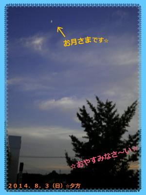 花ブ20140803-3