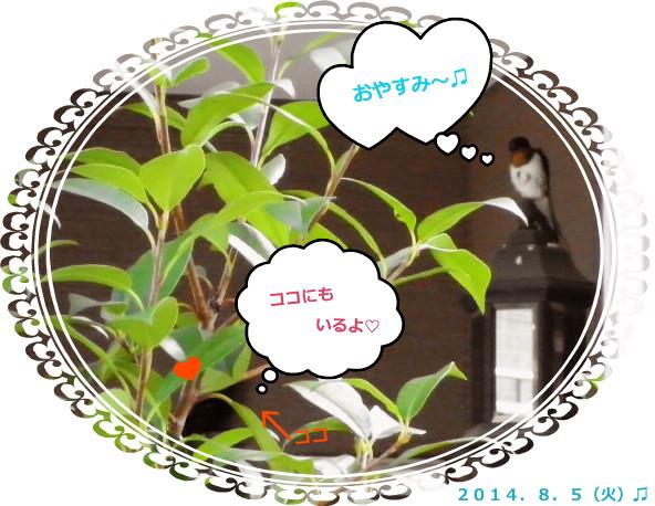 花ブ20140806-2