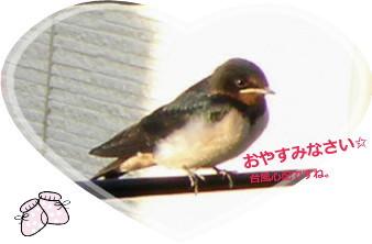 花ブ20140809-2