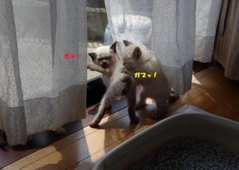 080ニコラ・モア20140505