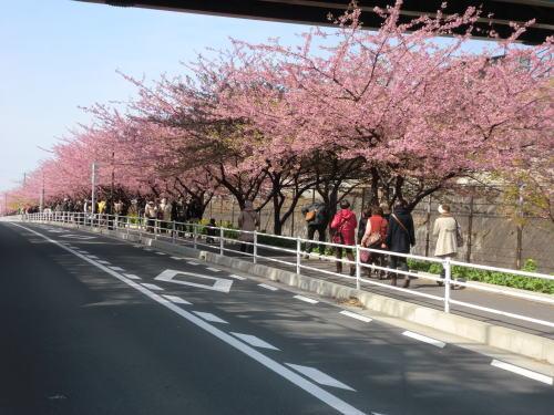 20140309_m_kawadu_4