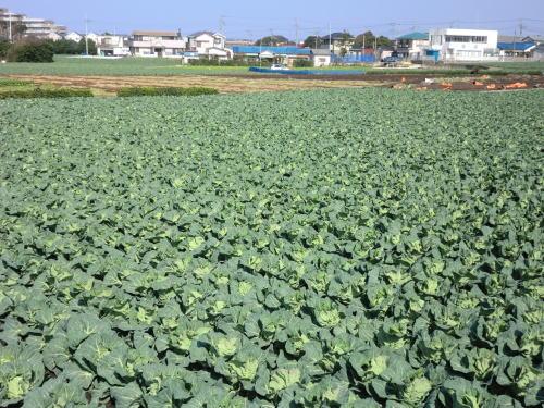 20140316_miura_7