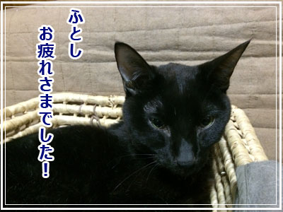 h1_20140811121321b0b.jpg