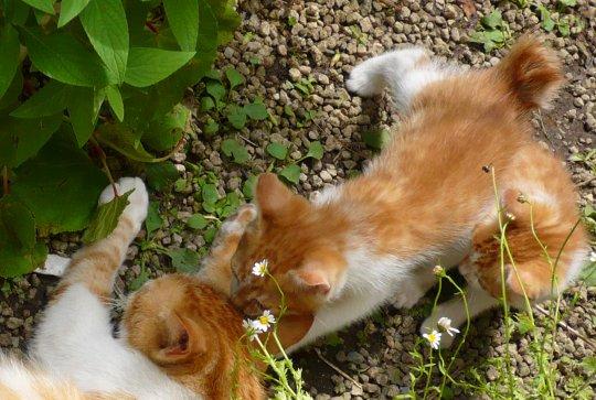 子猫124-080606