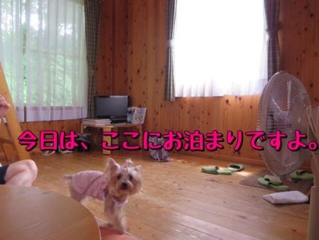 20140809205357a01.jpg