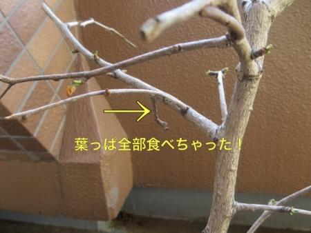 201409032119593fe.jpg