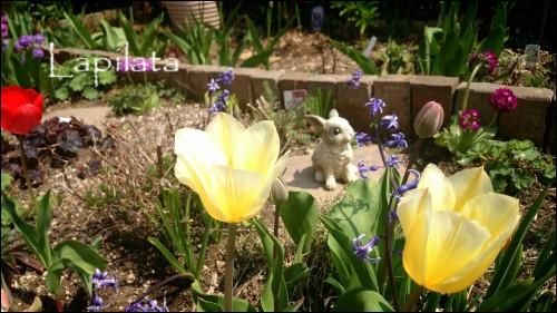 庭の花とうさぎ