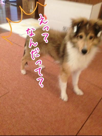 fc2blog_20140224224057a1c.jpg