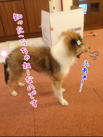fc2blog_2014022422422078c.jpg