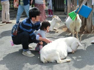 動物と触れ合い