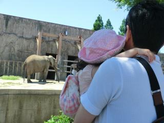 抱っこで象さん