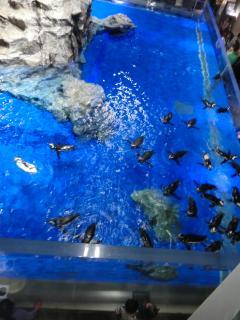 すみだ水族館 ペンギン上から