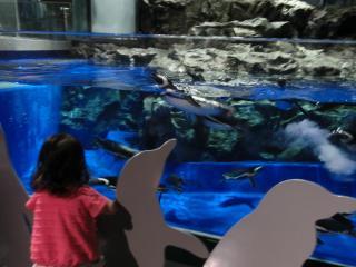 すみだ水族館 ペンギン水槽前