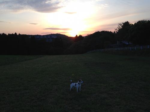 何回も見にきたくなる、夕陽