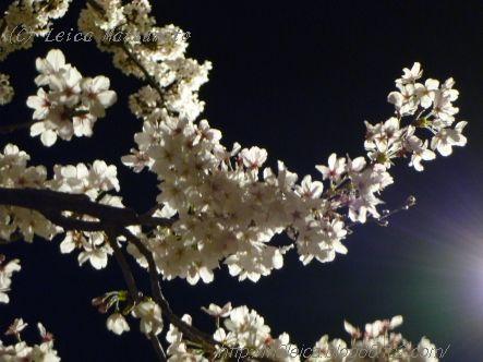 夜桜2014 act2