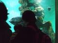 2014_0326母・水族館0067